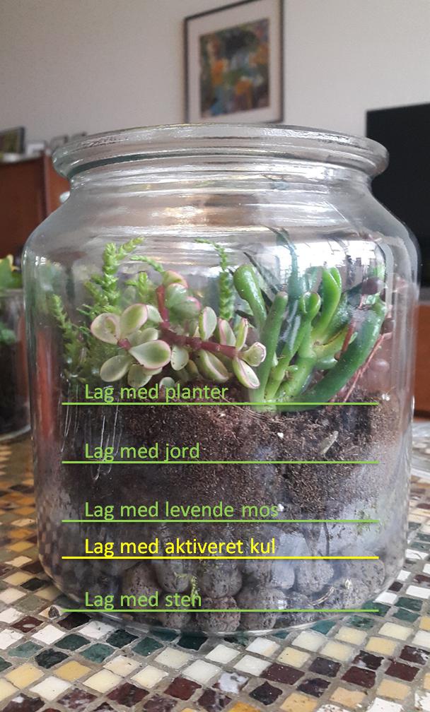 Er det nødvendigt med aktivt kul i dit terrarium? - Little Green World