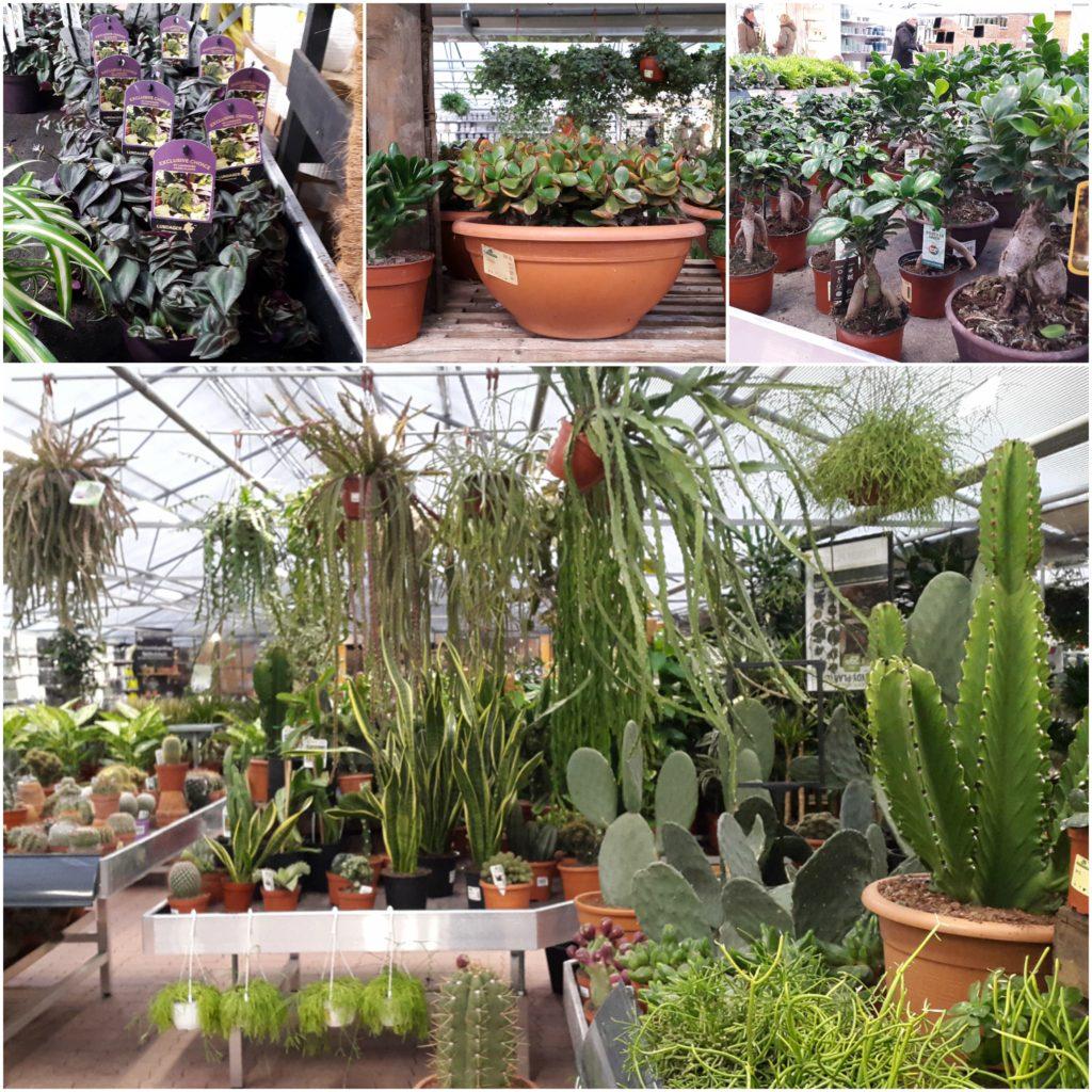 P jagt efter terrarie planter i plantorama little green for Planter til koidam