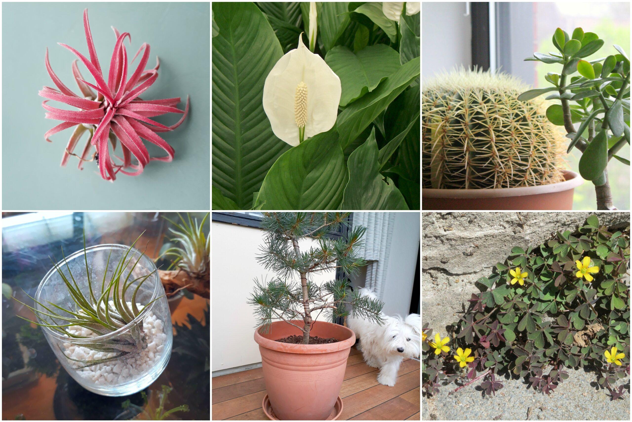 Hvad er en god begynder plante?