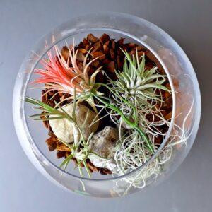 Luftplanter